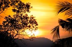 Árbol de la silueta en puesta del sol Fotos de archivo libres de regalías