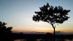 Árbol de la silueta en la puesta del sol asiática fotografía de archivo