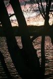 Árbol de la silueta por el agua en la puesta del sol Fotos de archivo