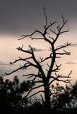 Árbol de la sombra Imágenes de archivo libres de regalías