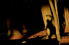 Árbol de la sombra de Sun Imagenes de archivo