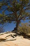 Árbol de la supervivencia Imagen de archivo libre de regalías