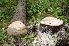 Árbol de la tala Fotos de archivo