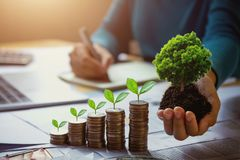 árbol de la tenencia de la mano de la mujer de negocios con la planta que crece en monedas dinero y tierra de ahorro del concepto foto de archivo libre de regalías