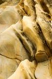 Árbol de la textura Fotografía de archivo