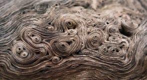 Árbol de la textura Fotos de archivo