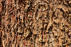 Árbol de la textura imagen de archivo