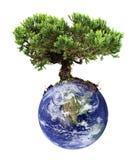 Árbol de la tierra Fotos de archivo