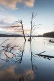Árbol de la tormenta en el lago Mallachie en Escocia Fotografía de archivo