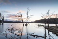 Árbol de la tormenta en el lago Mallachie en Escocia Foto de archivo