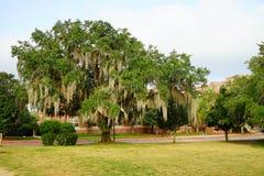 Árbol de la universidad de estado de la Florida imagen de archivo