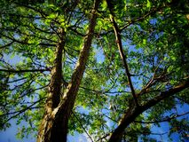 Árbol de la vida foto de archivo libre de regalías