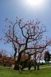 Árbol de la vida Imagen de archivo libre de regalías
