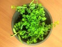 Árbol de la vida Foto de archivo