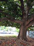 Árbol de la vida Imágenes de archivo libres de regalías