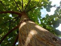 Árbol de la vida Fotografía de archivo