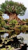 Árbol de la vida en el parque del reino animal de Disneys Foto de archivo libre de regalías