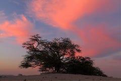 Árbol de la vida en nube dramática Imagen de archivo