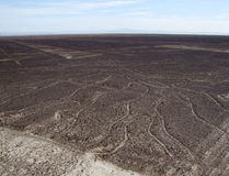 Árbol de la vida, líneas de Nazca Imagen de archivo libre de regalías