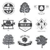 Árbol de la vida Lables y banderas de las FO de los árboles Fotografía de archivo libre de regalías