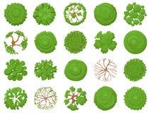 Árbol de la visión superior Establecimiento de árboles verdes, de la vegetación del mapa del parque y de la visión tropical de lo stock de ilustración