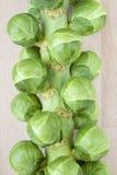Árbol de las coles de Bruselas Fotos de archivo