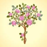Árbol de las rosas Fotografía de archivo libre de regalías