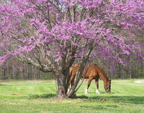 Árbol de Lavander con el caballo Imagen de archivo