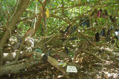 Árbol de lenguados perdidos foto de archivo libre de regalías