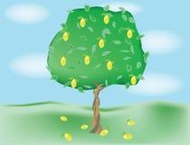 Árbol de limón creciente Fotos de archivo libres de regalías
