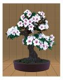 Árbol de los bonsais con las flores Imagen de archivo libre de regalías