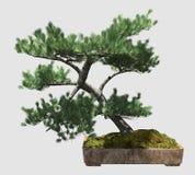 árbol de los bonsais del ejemplo 3D aislado en blanco Fotos de archivo