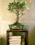 Árbol de los bonsais en cuarto de baño Foto de archivo