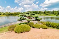Árbol de los bonsais en el jardín japonés en el jardín botánico de Chicago imágenes de archivo libres de regalías