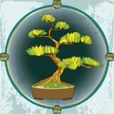 Árbol de los bonsais en el marco redondo Símbolo japonés tradicional Foto de archivo