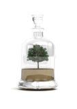 Árbol de los bonsais en la botella de cristal Imagenes de archivo