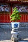 Árbol de los bonsais en pote de cerámica blanco azul delante del templo, tonalidad, Vietnam fotos de archivo libres de regalías