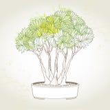Árbol de los bonsais en pote redondo en el fondo de las manchas blancas /negras Símbolo japonés tradicional Imagen de archivo libre de regalías