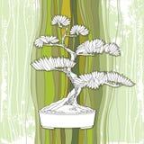 Árbol de los bonsais en pote redondo en el fondo rayado Símbolo japonés tradicional Imagen de archivo libre de regalías