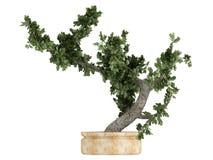 Árbol de los bonsais en un crisol Fotos de archivo
