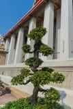 Árbol de los bonsais en Wat Pho Kaew, Bangkok, Tailandia Fotos de archivo libres de regalías