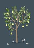 Árbol de los bulbos Fotografía de archivo