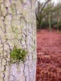 Árbol de los hongos imagen de archivo