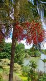 Árbol de los jardines botánicos de Singapur Singapur fotografía de archivo libre de regalías