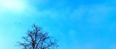 Árbol de los pájaros de la libertad del cielo azul Imagenes de archivo