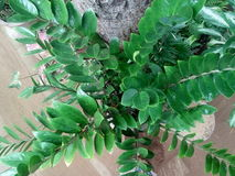 Árbol de Luky Imagen de archivo libre de regalías