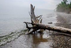 Árbol de madera de la deriva en la orilla de niebla del lago Michigan imagenes de archivo