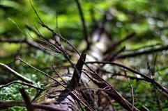 Árbol de mentira Foto de archivo libre de regalías
