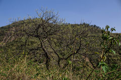 Árbol de Montain Imagenes de archivo