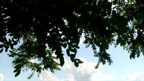 Árbol de mudanza de las hojas en naturaleza del parque metrajes